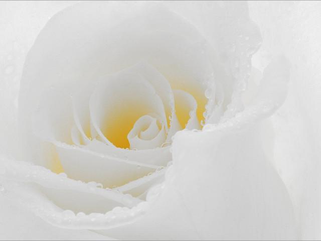 Free Rose Gardening Catalog