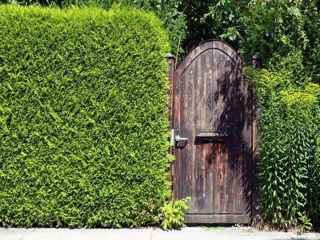 How to Shield Your Garden from Prying Eyes