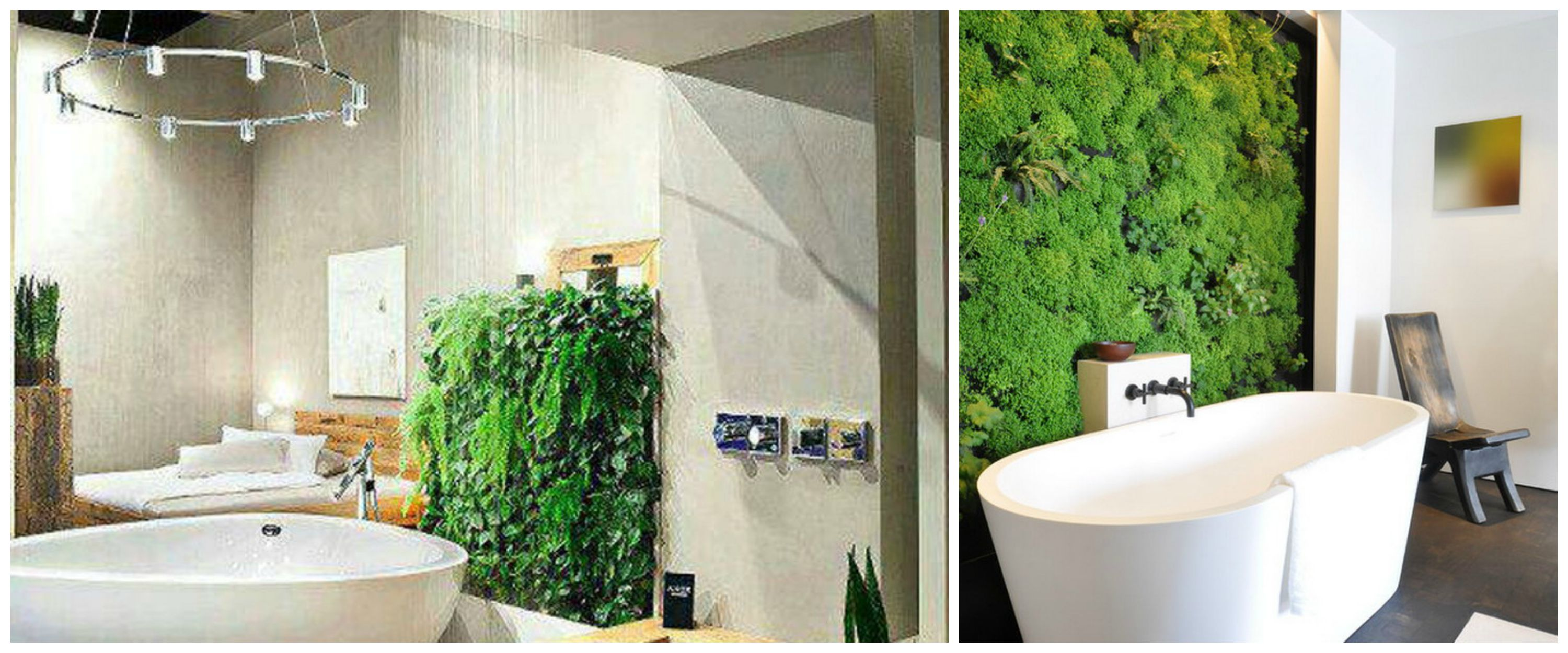 indoor bathroom vegetation