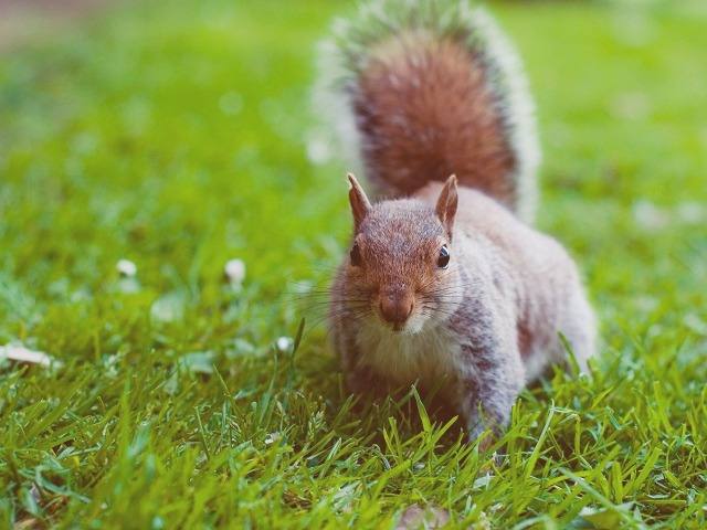 Furry Friends: Attracting Squirrels to Your Backyard