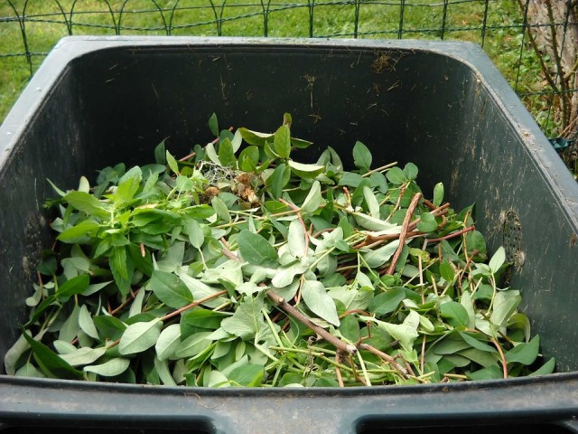 Green Waste Management Tips