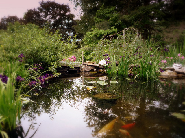 How to Build a Stunning Koi Pond in Your Garden