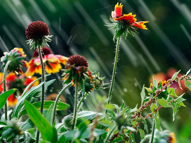 How to protect your garden against harsh elements